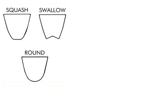 swallow round squash